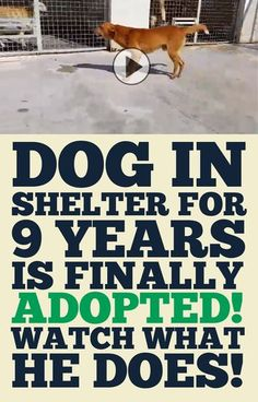 Dog locked up in shelter for 9 years is finally adopted! Watch what he does! So many pets to adopt - could you take just one? Animals And Pets, Funny Animals, Cute Animals, Rescue Dogs, Animal Rescue, Animal Adoption, Shelter Dogs, Cute Puppies, Cute Dogs
