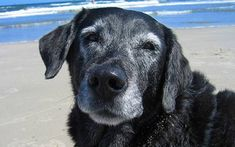 3 Amazing Ways To Honor A Dog That Has Passed Away.     Saying goodbye to someone you love is one of the hardest things that you will ever deal with in life. And that's not just for humans, but also for our furry family members. Losing a dogmany times leaves an irreplaceable …