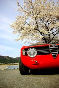 Alfa Romeo Giulia #alfa #alfaromeo #italiandesign