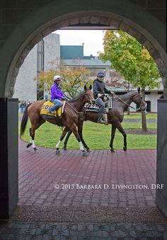 BEHOLDER, schooling this morning in the Keeneland paddock.  #BreedersCup