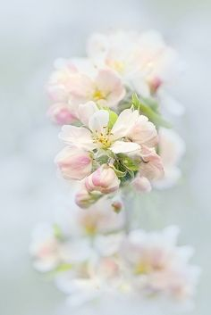 fairy tale ethereal light - pink flowers