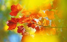 Autumn breaks: readers' tips, recommendations and travel advice http://www.telegraph.co.uk/travel/destinations/europe/11127736/Autumn-breaks-readers-tips-recommendations-and-travel-advice.html