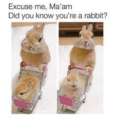 Animal Captions, Funny Animal Jokes, Funny Cat Memes, Cute Funny Animals, Funny Cute, Cute Cats, Hilarious Sayings, 9gag Funny, Funny Signs