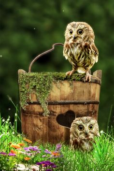 Owls (Waiting for Mom by Jan Staes) #Owls
