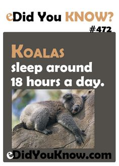 Did you know? I want to be a koala for a few weeks...lol