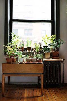 Lots of cute little plants by a small window