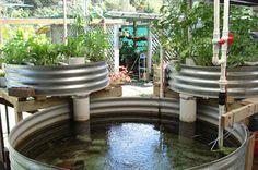 Aquaponics - I like the metal tanks, instead of plastic.