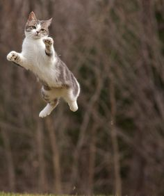 Jumping around is a great way to get in shape for cats and kittens.