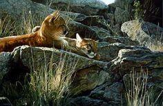 TerryIsaac - Afternoon Light - Cougar