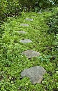 Cultivate the moss to grow around stones or stump stepping stones.