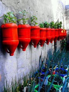 Basil wall from plastic cartons