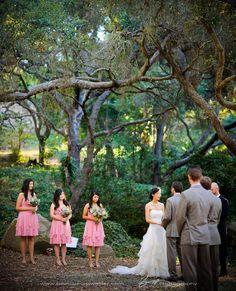 Weddings at the Santa Barbara Museum of Natural History  This is beautiful!