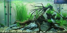 This would be a nice Pacific Northwest setup.  Digging  the pebbles.   Scape by Gregoire Wolinski
