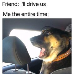 Your driving does me a frighten funny pics, funny gifs, funny videos, funny memes, funny jokes. LOL Pics app is for iOS, Android, iPhone, iPod, iPad, Tablet