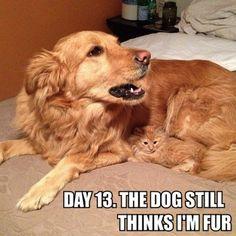 Day 13. The Dog Still Thinks I'm Fur