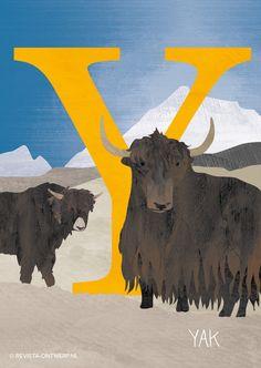 De Y is van yak, een grote rundersoort. De lange vacht beschermt hem tegen de kou. Hij kan maar liefst 1000 kilo wegen!