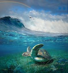 I love the above and below water at the same time! so cool! Libertà di vita by Giovanni Ambrosioni