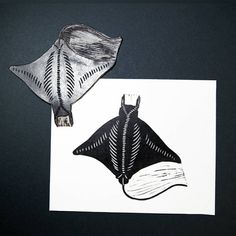 9 отметок «Нравится», 1 комментариев — Ragni Uribva (@ragniuribva) в Instagram: «The bentfin devil ray, lesser devil ray, smoothtail devil ray, smoothtail mobula, or Thurston's…»