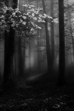 Kunstendlich liebt den Wald als Fotomotiv. Dieses Foto ist gut gelungen. Kunstendlich lässt sich inspirieren. Fotokunst gibt es auch von Kunstendlich.