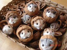 filz hamster in Walnuss-Schale