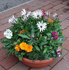 """more container gardening and I like how this website has a """"map"""" for planting!"""