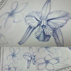 Estudo botânico #flowers #bicdrawing #pen #draw #flores #botanical #caneta #bic #art
