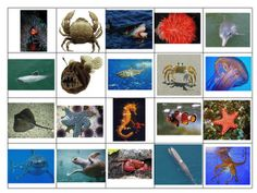 Ocean Animals cards  from The Homeschool Den