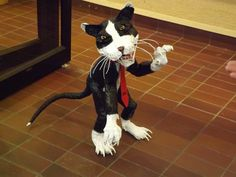 Kisses, Boston Terrier, Centre, My Arts, Cats, Projects, Animals, Inspiration, Gatos