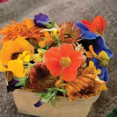 Edible Flower Collection