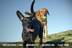Photographing Running dogs tips on what iso ect