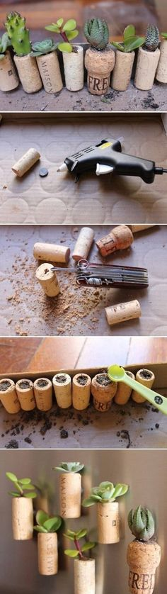 DIY Wine Cork Succulent Garden attache magnets for the refrigerator or suction cups for a window. Brilliant!