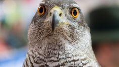 #Hessen hat seinen sechsten Fall von Vogelgrippe - FAZ - Frankfurter Allgemeine Zeitung: FAZ - Frankfurter Allgemeine Zeitung Hessen hat…