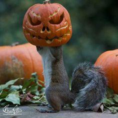 Eekhoorns feestje