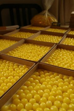 lemon drops. for eating and decorating.