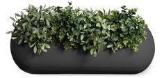 Self-Watering Planter by rephorm | MONOQI