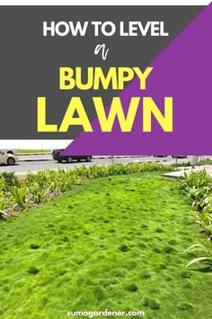 If you're looking to level a bumpy lawn, look no further. Here's the tips on how to deal with it. #gardeningtips #lawncare #sumogardener