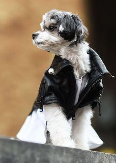 The Best NYFW Fall 2017 Street Style - Fall & Winter Fashion Outfit Ideas | New York Fashion Week F/W 17 | Dog + leather moto jacket = amazing