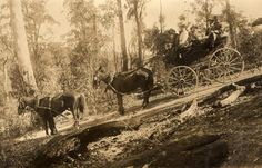 Travelling down a steep slope in Walhalla, about 1912 Museum Victoria, Australia Vintage Photographs, Vintage Images, Victoria Australia, Historical Pictures, Melbourne, Past, Travelling, Pride, Track