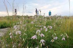 Random Harvest Indigenous Plant Nursery - 10 Reasons to Create Indigenous Grasslands in the Urban Landscape
