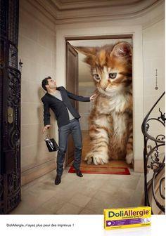 DoliAllergie - N'ayez plus peur des imprévus - Advert & Animals