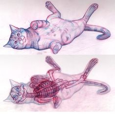 Study of a wildly speeding cat - watch out for those, they might run you over! I used ref pictures for this, both to learn and understand the anatomy be. Cat Anatomy, Anatomy Study, Anatomy Drawing, Cat Drawing, Animal Anatomy, Cat Reference, Anatomy Reference, Animal Sketches, Animal Drawings