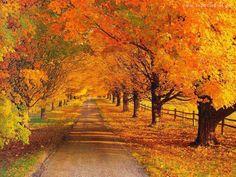 Image result for jesien zlota