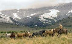 Zollinger Quarter Horse Ranch. #CountryHome www.rangeradio.com