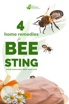 4 Best Home Remedies for Bee Sting with Chamomile, onion juice, cabbage poultice and high dose Vitamin C. #beesting Cabbage Juice, Onion Juice, Bee Sting First Aid, Remedies For Bee Stings, High Dose Vitamin C, Tick Bite, Organic Vitamins, Insect Bites, Natural Skin