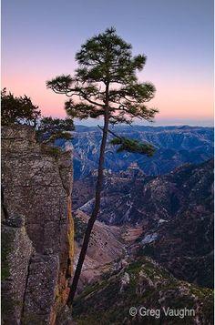 Copper Canyon near Barrancas, Chihuahua, Mexico lizshadow