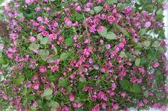 's-Gravenzande wat een lief bloemetje