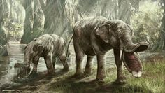 Genus: Platybelodon  …an extinct genus of mammals related to elephants that lived in Miocene Africa, Europe, Asia and North America. Like other gomphotheres Platybelodon sported two unusually shovel-like teeth. Platybelodon probably used these teeth to strip-bark from trees, using its incisors as a scythe, grasping branches with its trunk and rubbing them against its teeth to cut them.