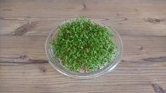 Kresse anpflanzen - Aktivitäten - Ideen für Kinder zu Hause während der ... How To Dry Basil, Herbs, Food, Corona, Seeds, Kids, Essen, Herb, Meals