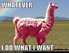 now this is funny lol. oh how I love pink unicorn llamas with rainbows! Alpacas, Funny Shit, The Funny, Funny Memes, Funny Stuff, Funny Quotes, Puns Jokes, Lama Animal, Art Adventure Time