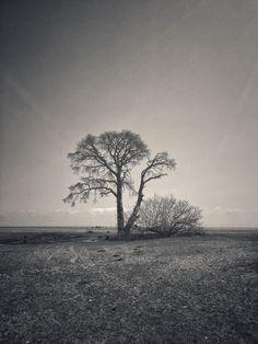 The tree is somewhere that excites me! Çıralı/ ANTALYA☀️
